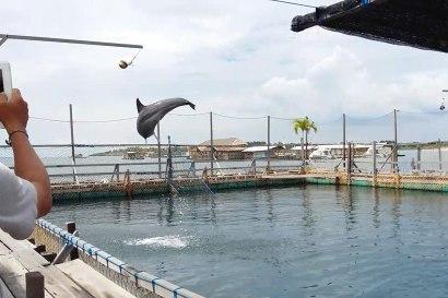 dolphinlodge06